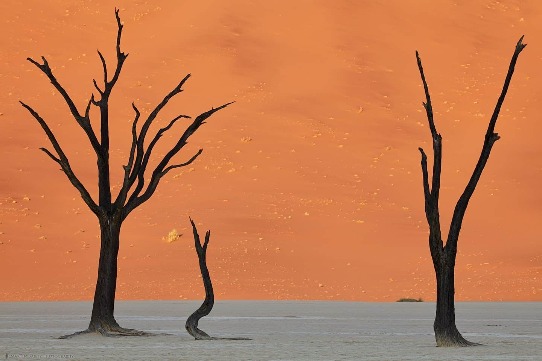 Deadvlei Camel Thorn Trees :: デッドフレイのキャメルソーンツリー