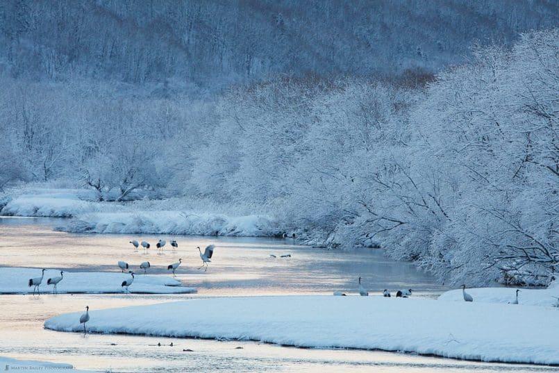 Snowy Morning at Setsuri River