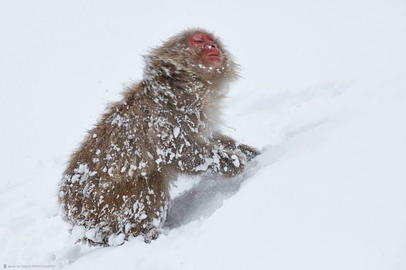 Shaking Off Snow