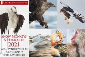 Snow Monkeys & Hokkaido Tour & Workshop 2021