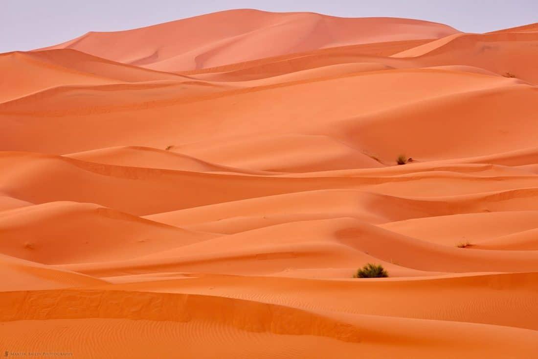 Sahara Dunes at Dawn