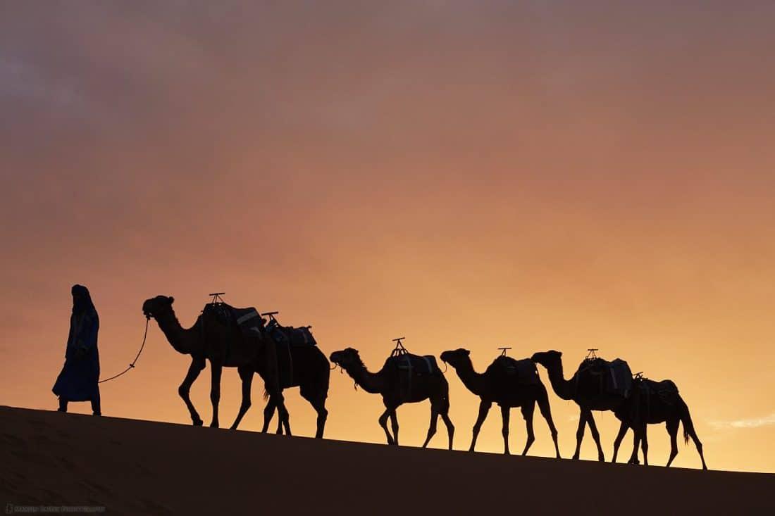 Camels with Saharan Sunset