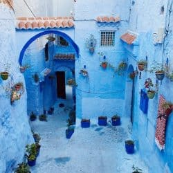 Blue Walls and Plant Pots