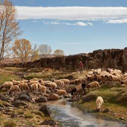 Shepherd with Sheep and Mountain Stream