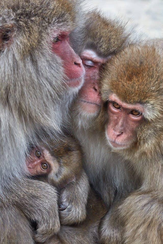 Monkey Huddle