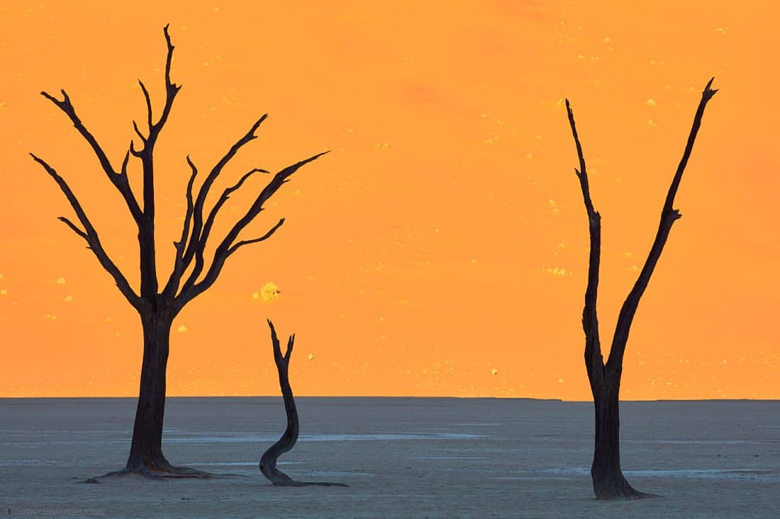 Deadvlei Silhouetted Camelthorn Trees
