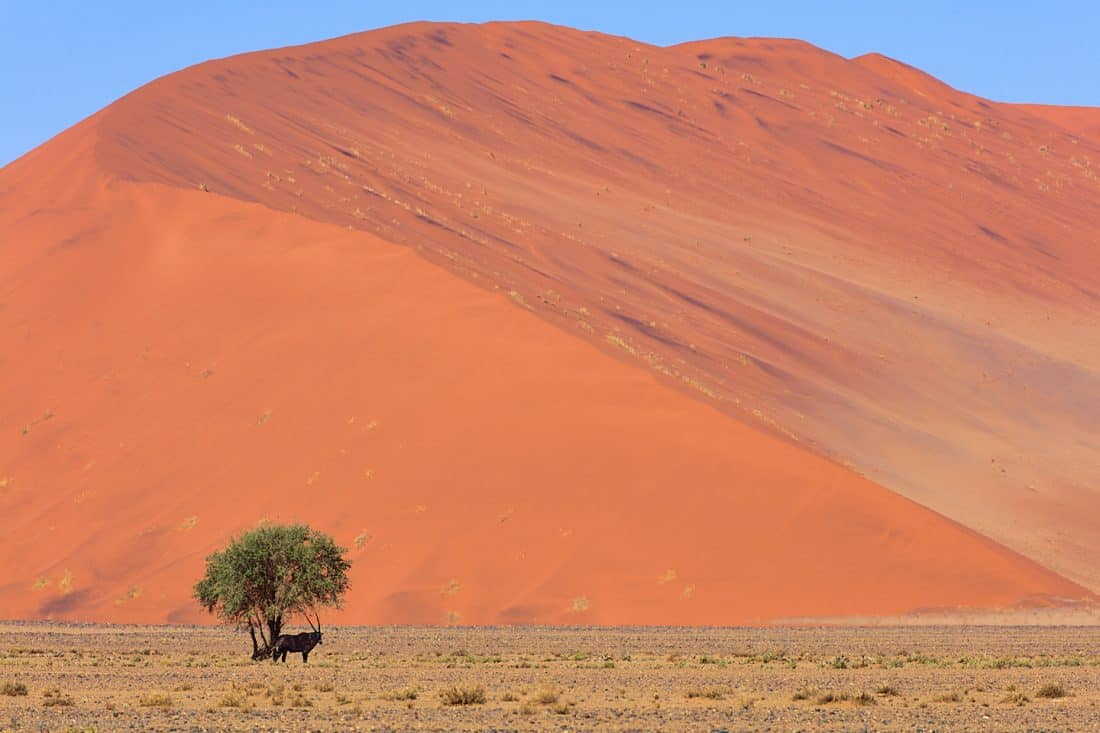 Oryx in the Shade