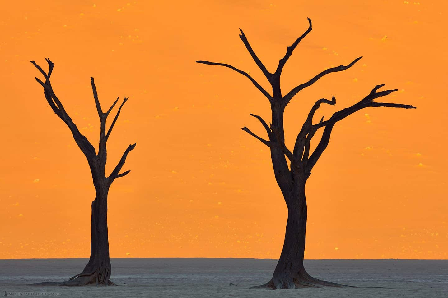 Deadvlei Camelthorn Tree Silhouettes
