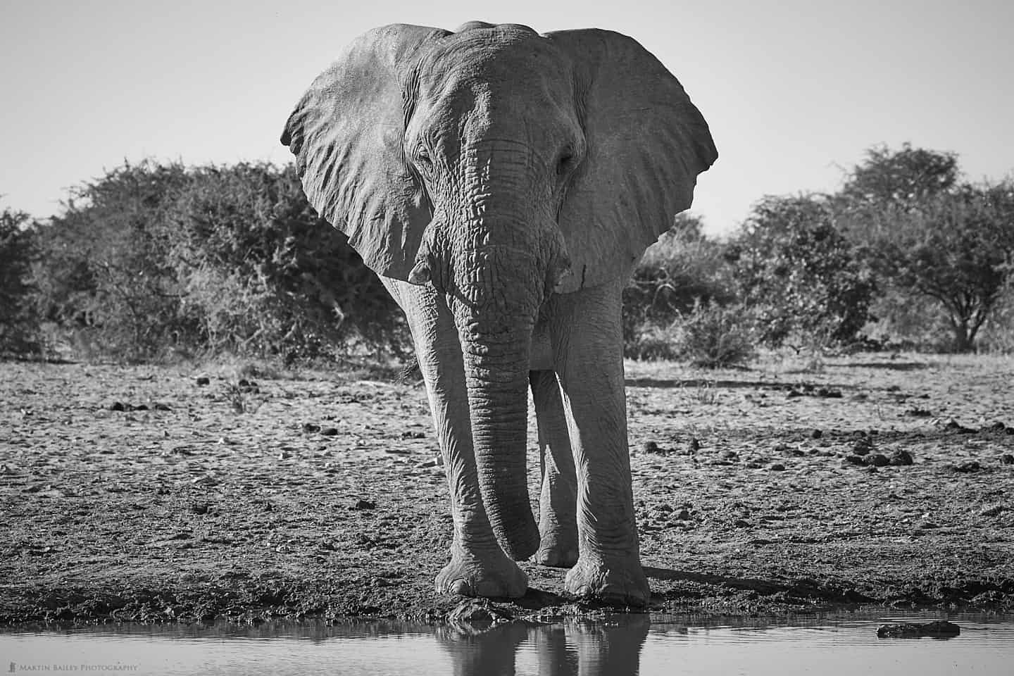 Elephant at Waterhole