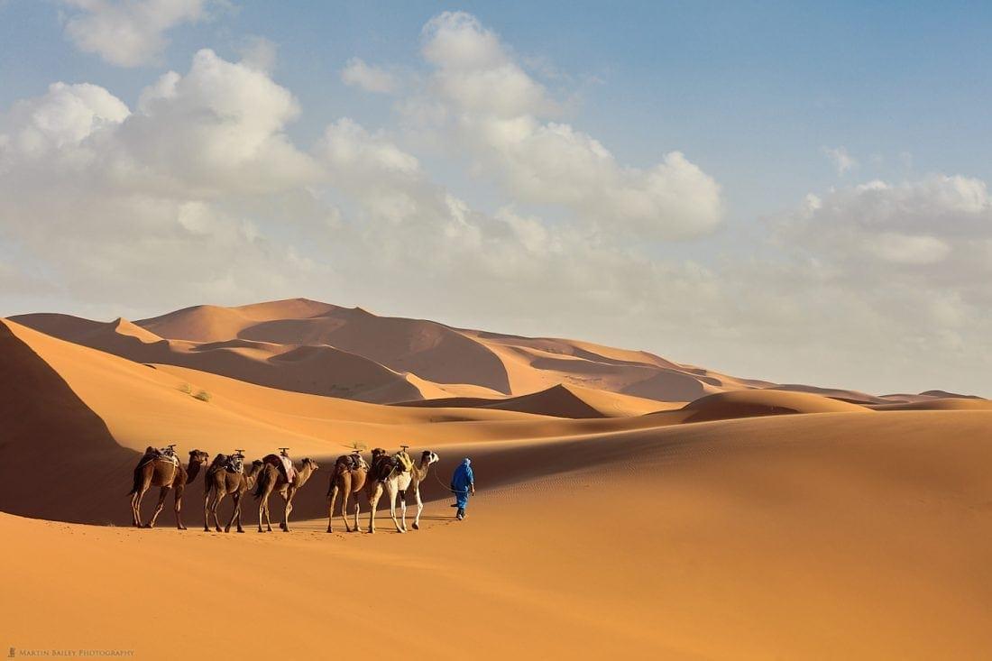 Camel Handler with Camels in Sahara Desert