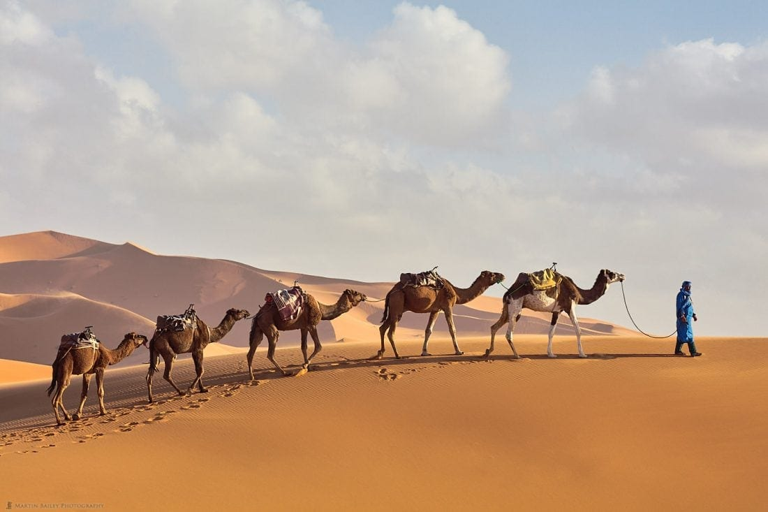 Camels Reach the Brow of the Dune