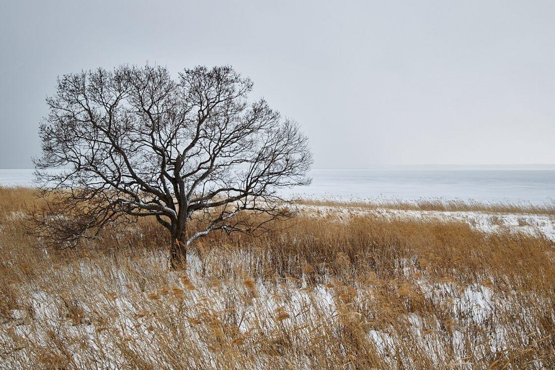 Saroma Tree