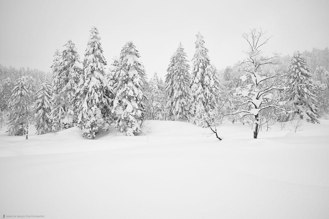 Mount Asahi Trees in Snow