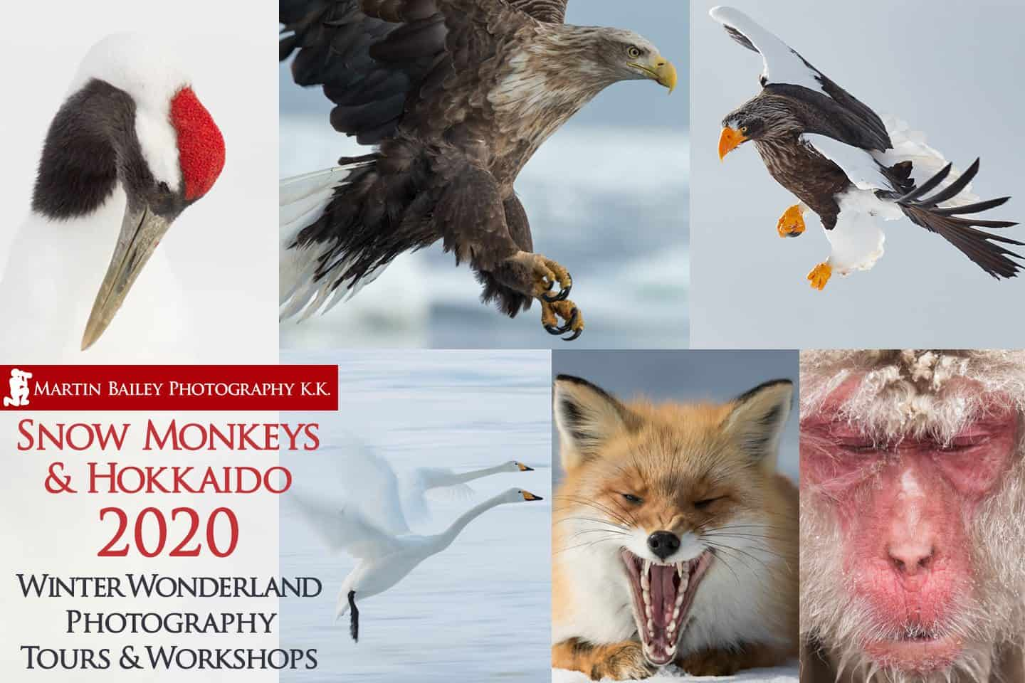 Snow Monkeys & Hokkaido Tour & Workshop 2020