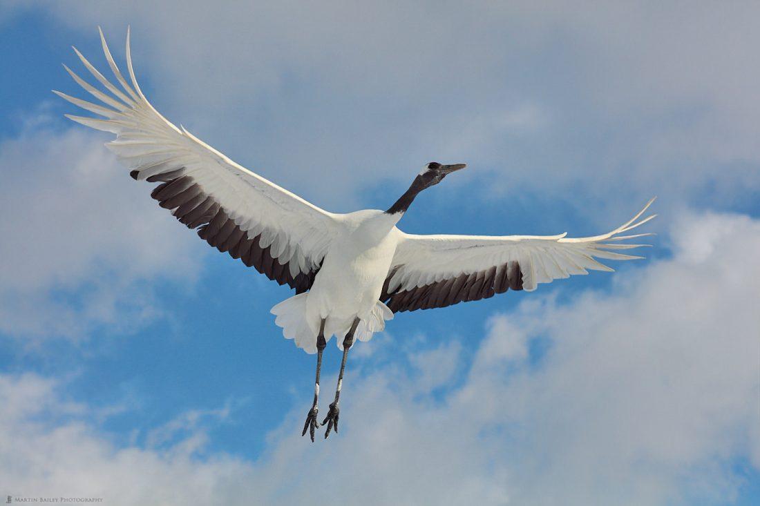 Crane Flyover