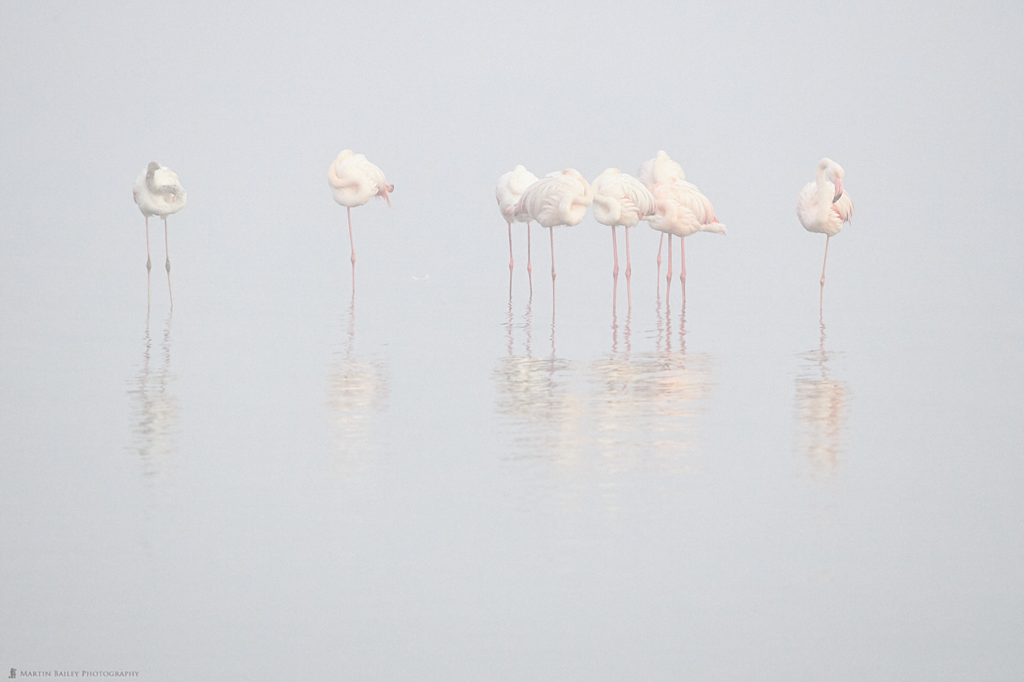 Flamingoes in the Mist