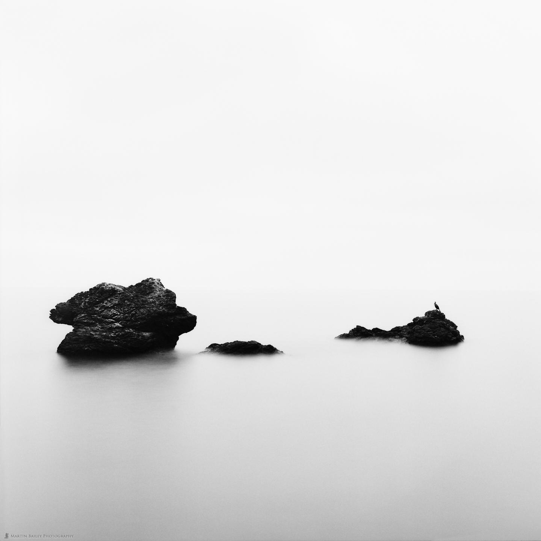 Sea, Rocks, and Cormorant