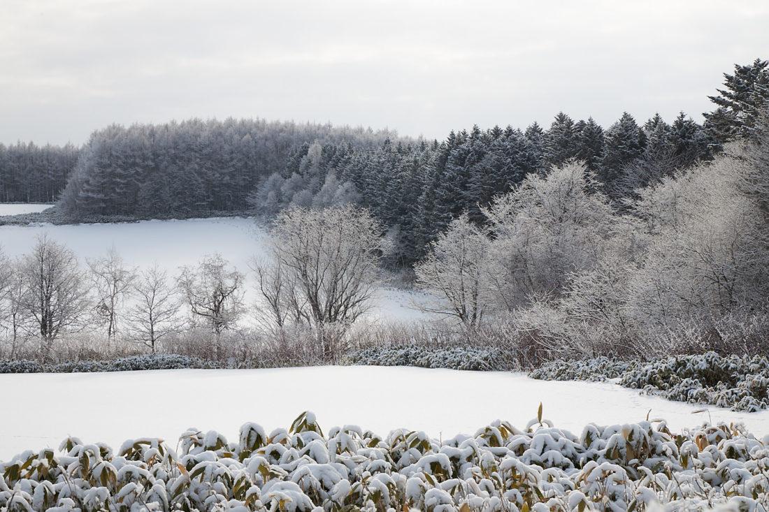 Okoppe Winter Wonderland