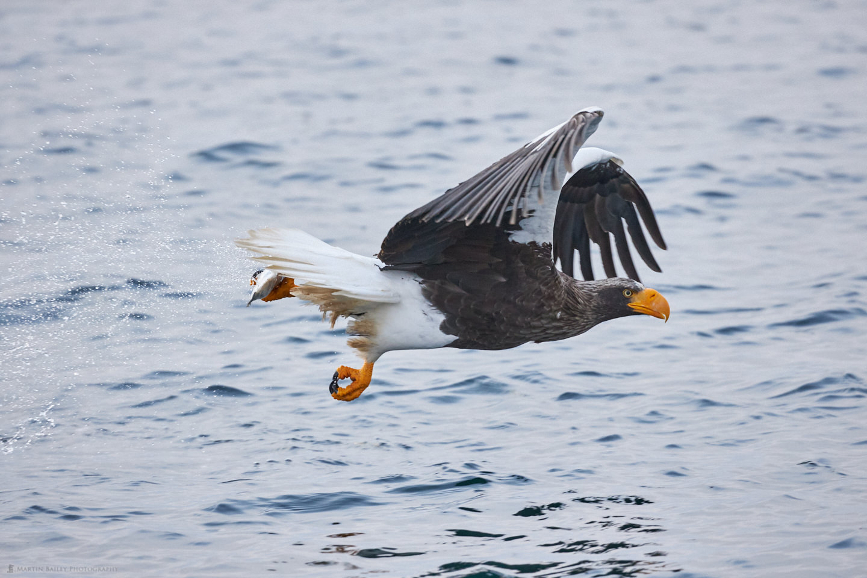 One Talon Catch