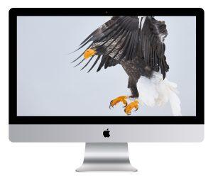 Steller's Sea Eagle Catch Wallpaper Mockup