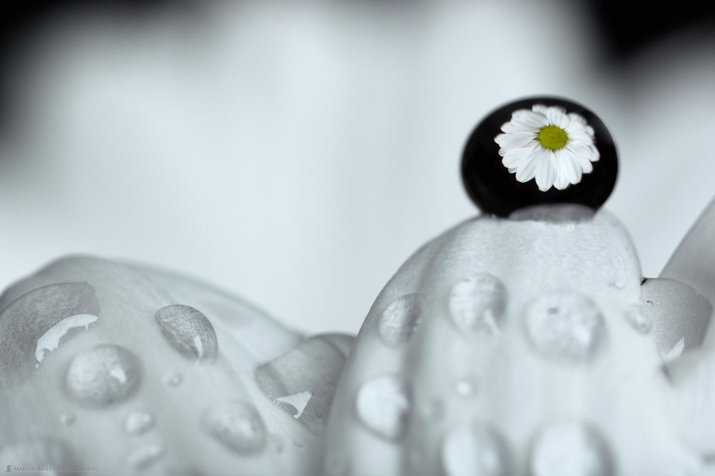 Flower in Droplet #4 (2.4X)
