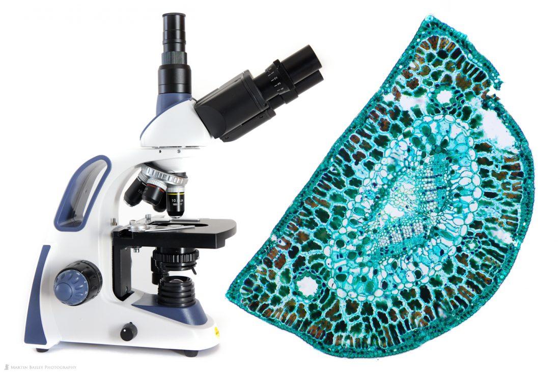 Swift SW380T Compound Microscope