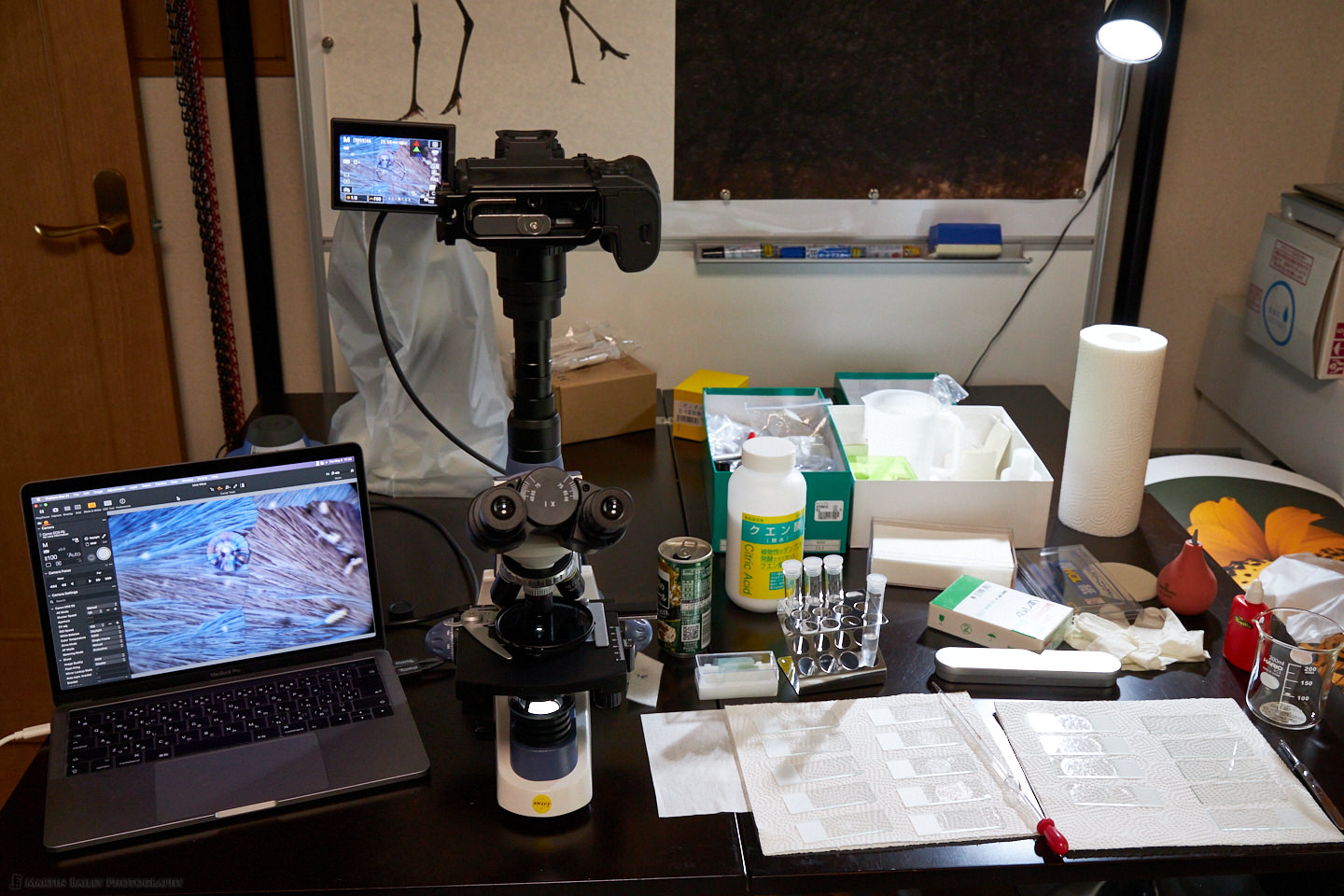 Photographing Polarized Citric Acid Crystals