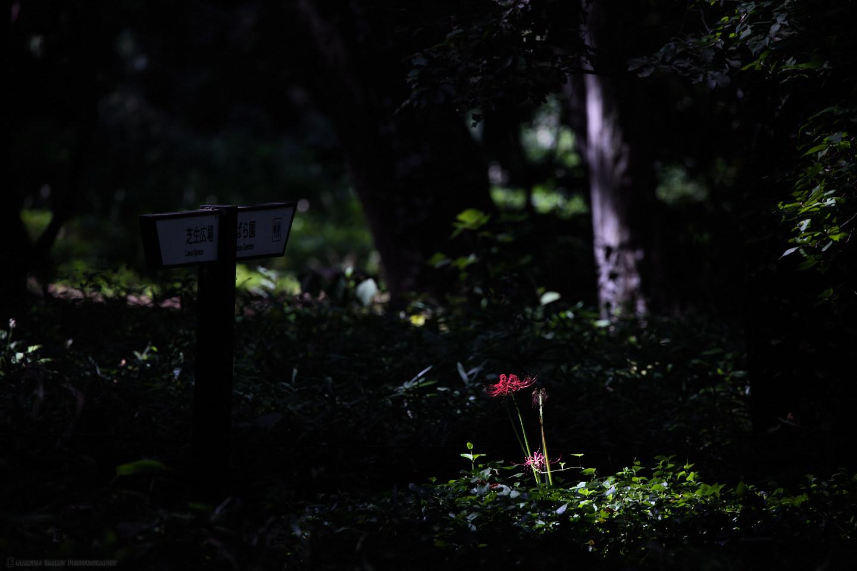 Spotlit Equinox Flower